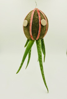 Picture of Hanging Coconut Octopus Planter