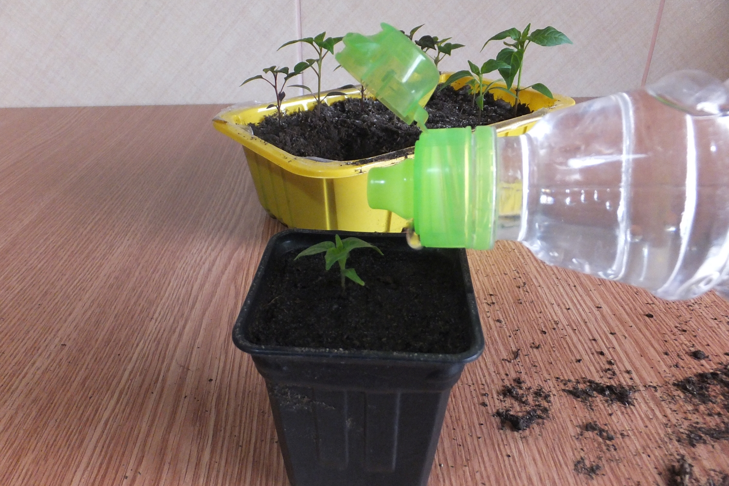Picture of Repot Your Seedlings