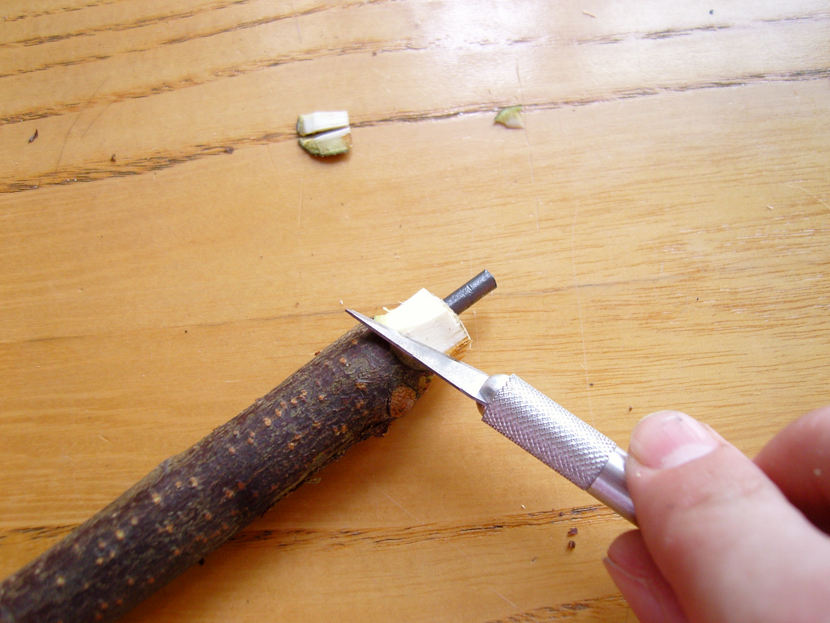 Picture of Shaping the Tip