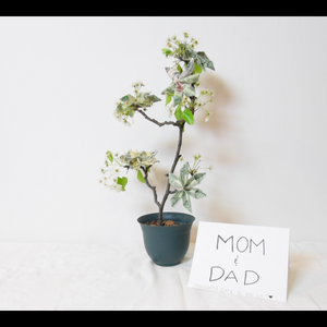 Money Tree: Origami Dollar Flowers