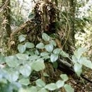 Make a simple ghillie suit