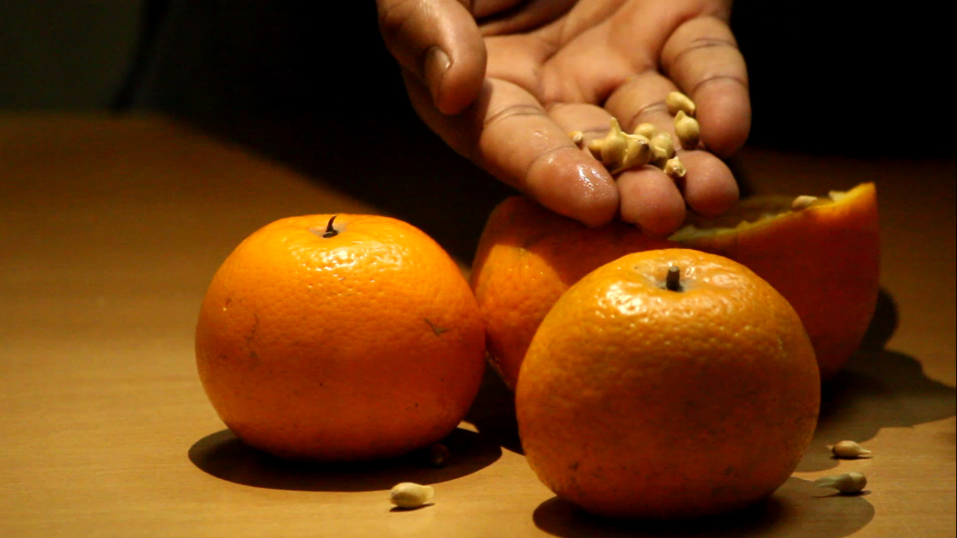 Picture of Choosing, Extracting and Peeling of Seeds.