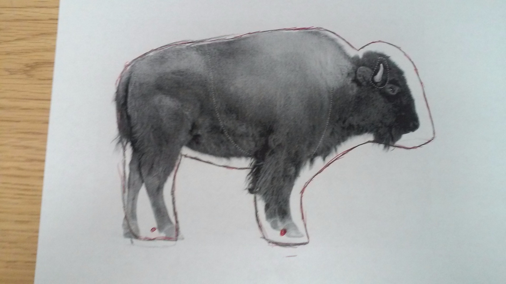 Picture of Find a Picture of a Buffalo