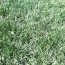 How to make a grass farm