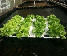 Floating Veggie Raft for fish ponds