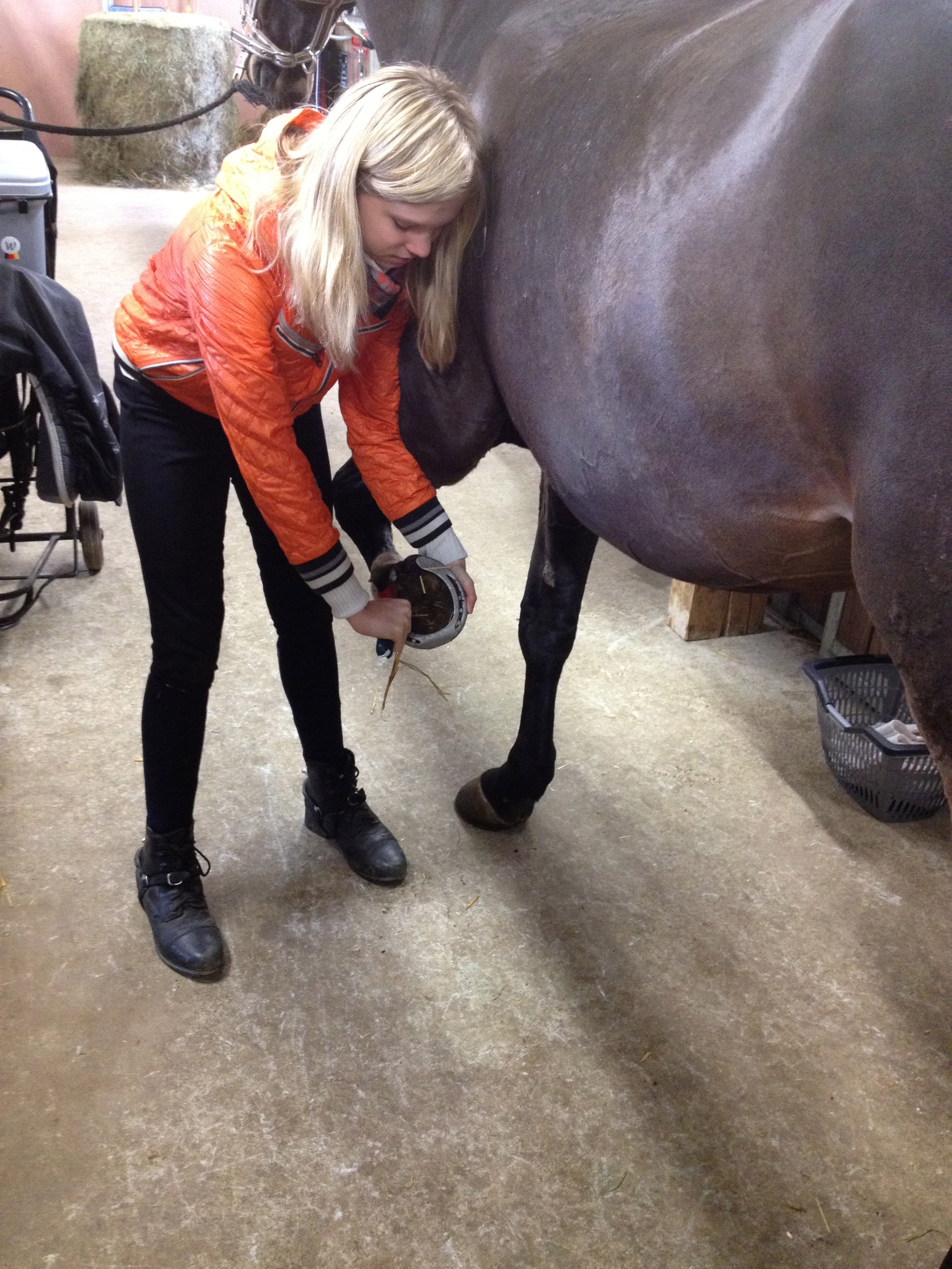 Picture of Cleaning the Hoofs: