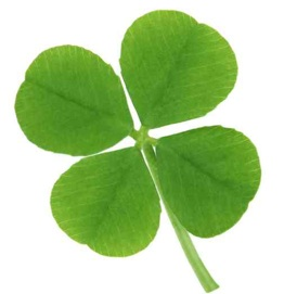 Picture of The Cursed Four Leaf Clover