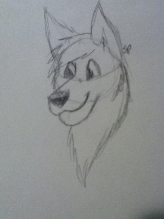 How to Draw an Anthro Wolf Head
