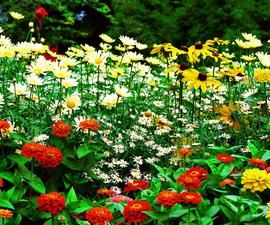 Garduino-Automated Gardening System