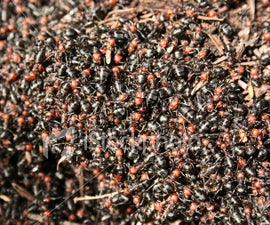 How to Get Rid of Ants (or) How to Kill an Ant Invasion
