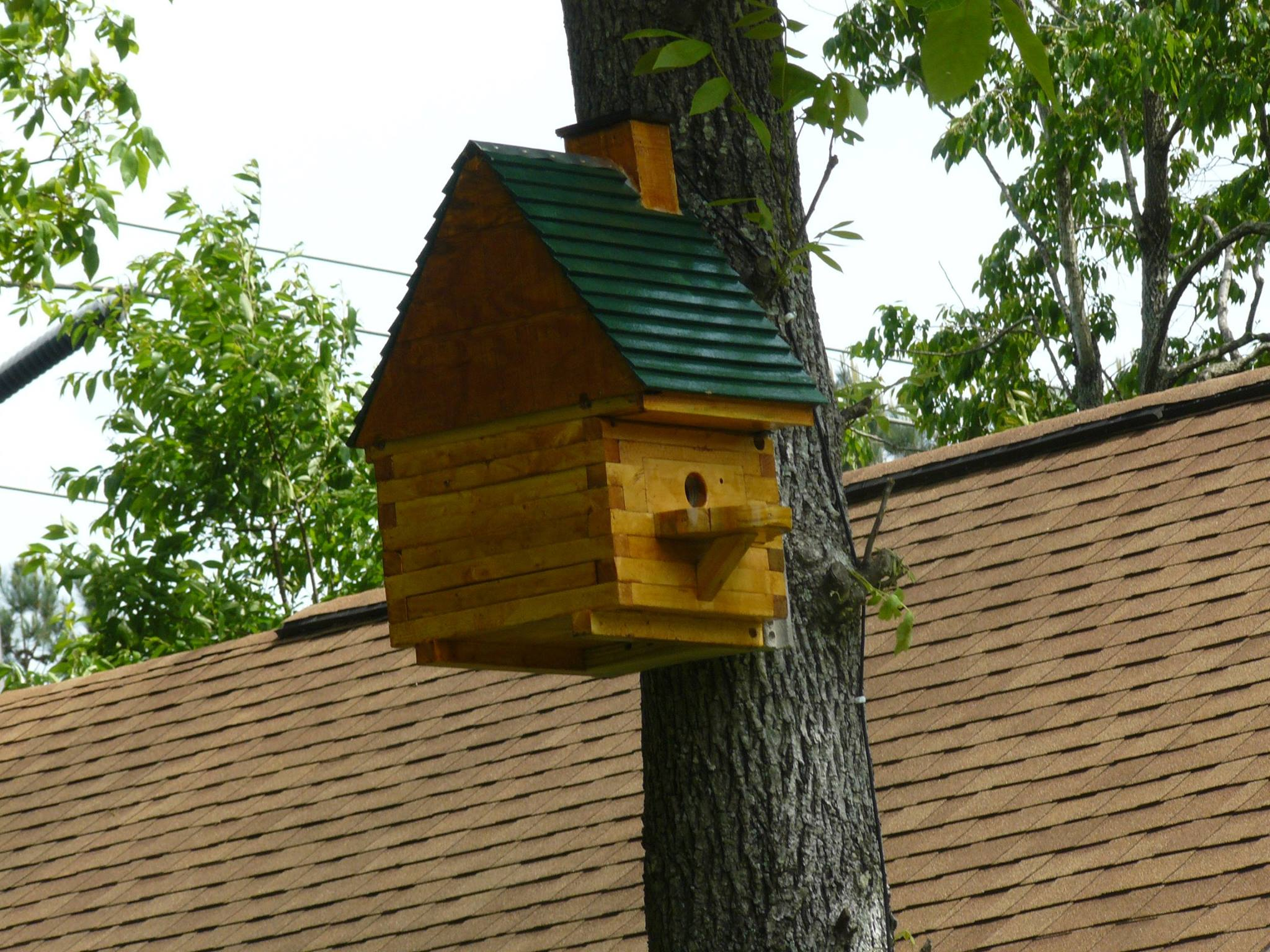 Picture of Flying Squirrel House W/Spy Cam