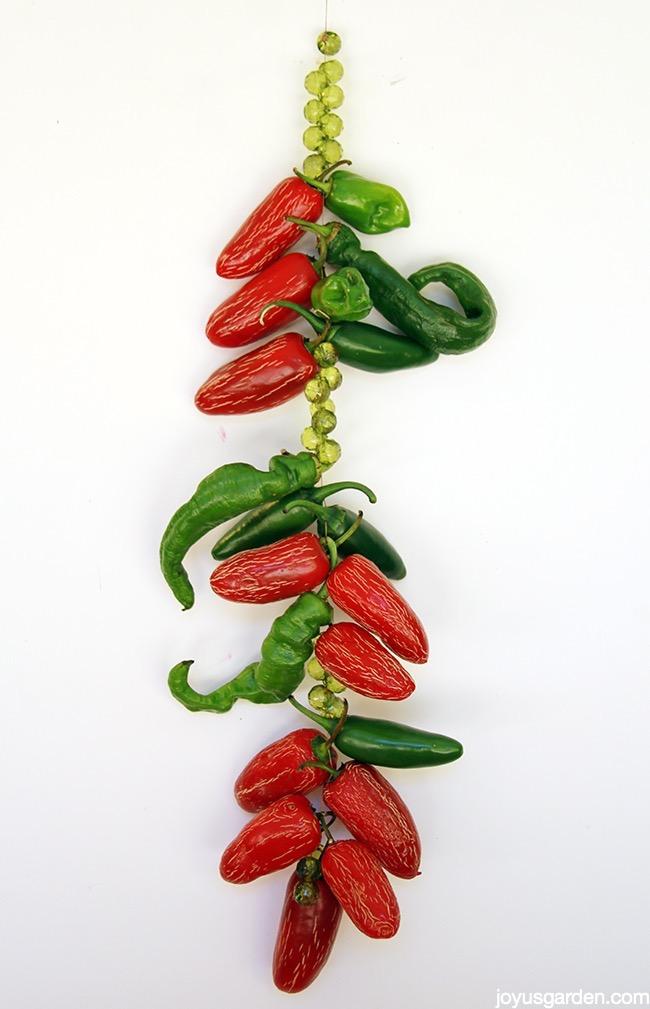 Picture of A Jalapeno Pepper Suncatcher