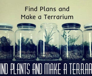 Find Plants and Make a Terrarium