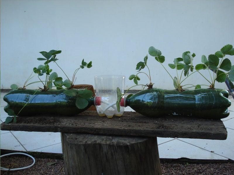 Self Irrigation Flower Cultivation 4 Steps