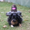 Diglett Dog Costume