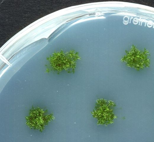 Picture of Simple Algae Home CO2 Scrubber - Part II Algae Cultures and Breeding