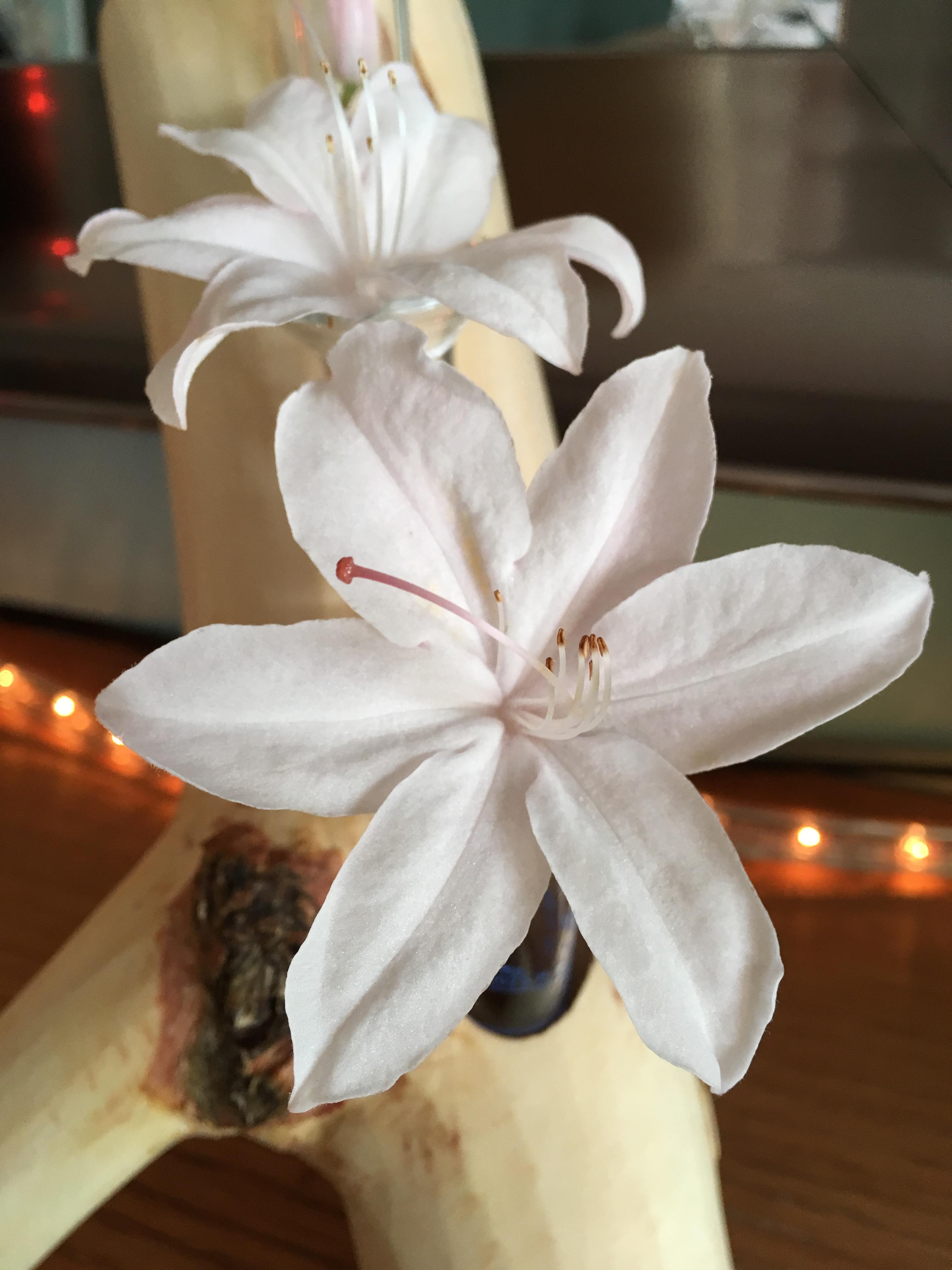 Picture of Make Pretty!