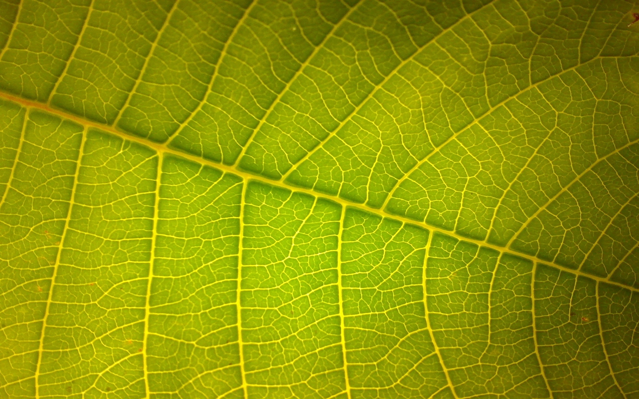 Picture of Macros of My Garden Shot Via Mobile Phone