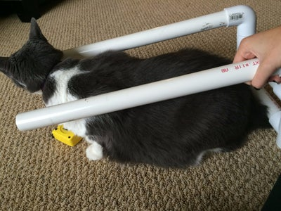 How to Make a Cat Wheelchair