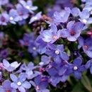 Clicking Macro Flower Photographs