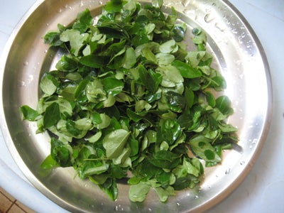 Remove Stems and Rinse Curry Leaves