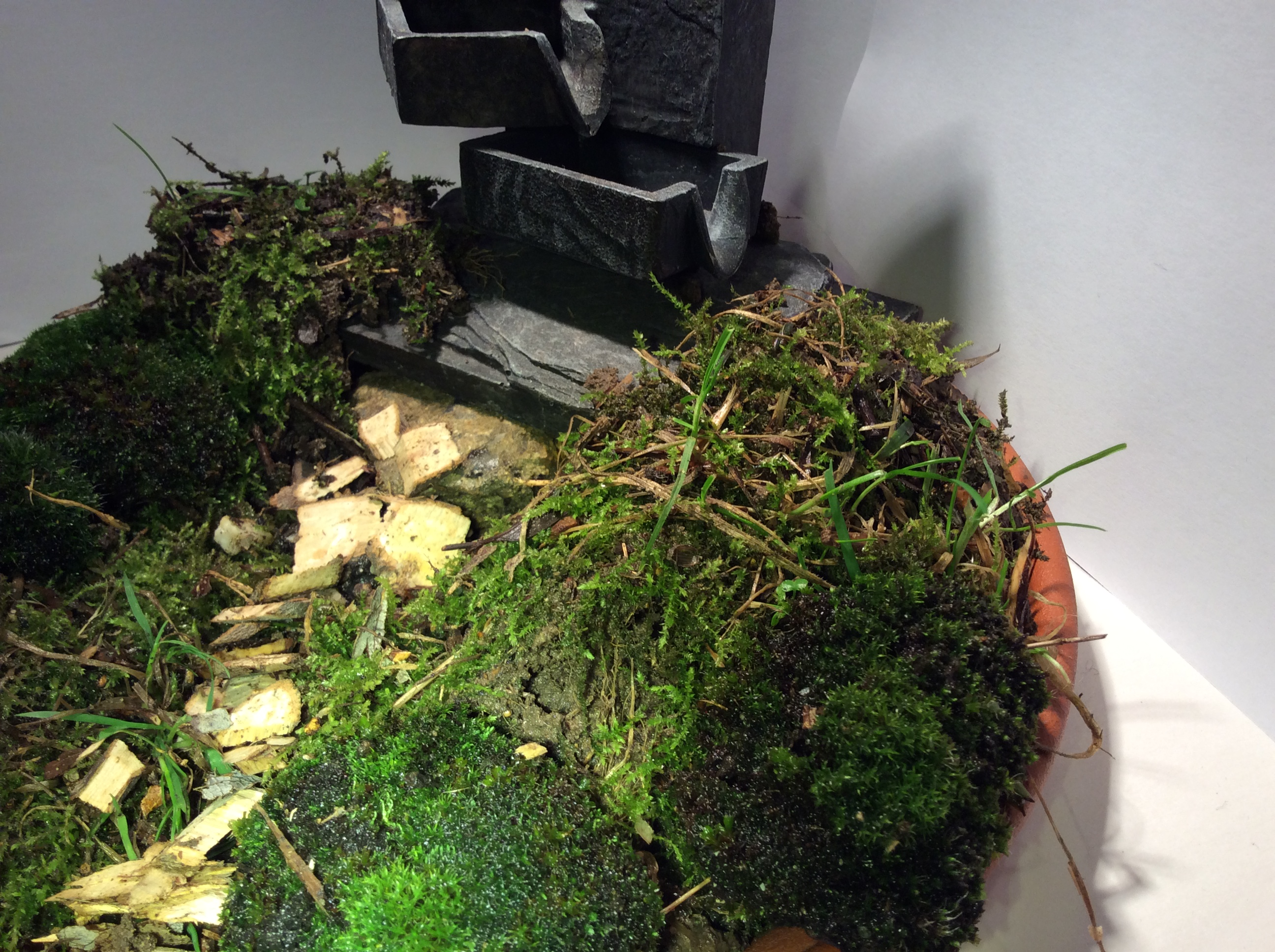 Picture of Adding the Moss.