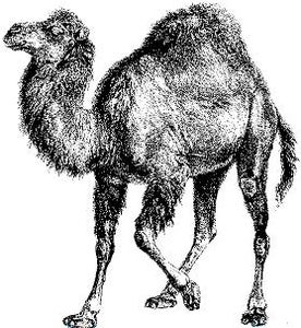 Installing Perl and Appropriate Modules