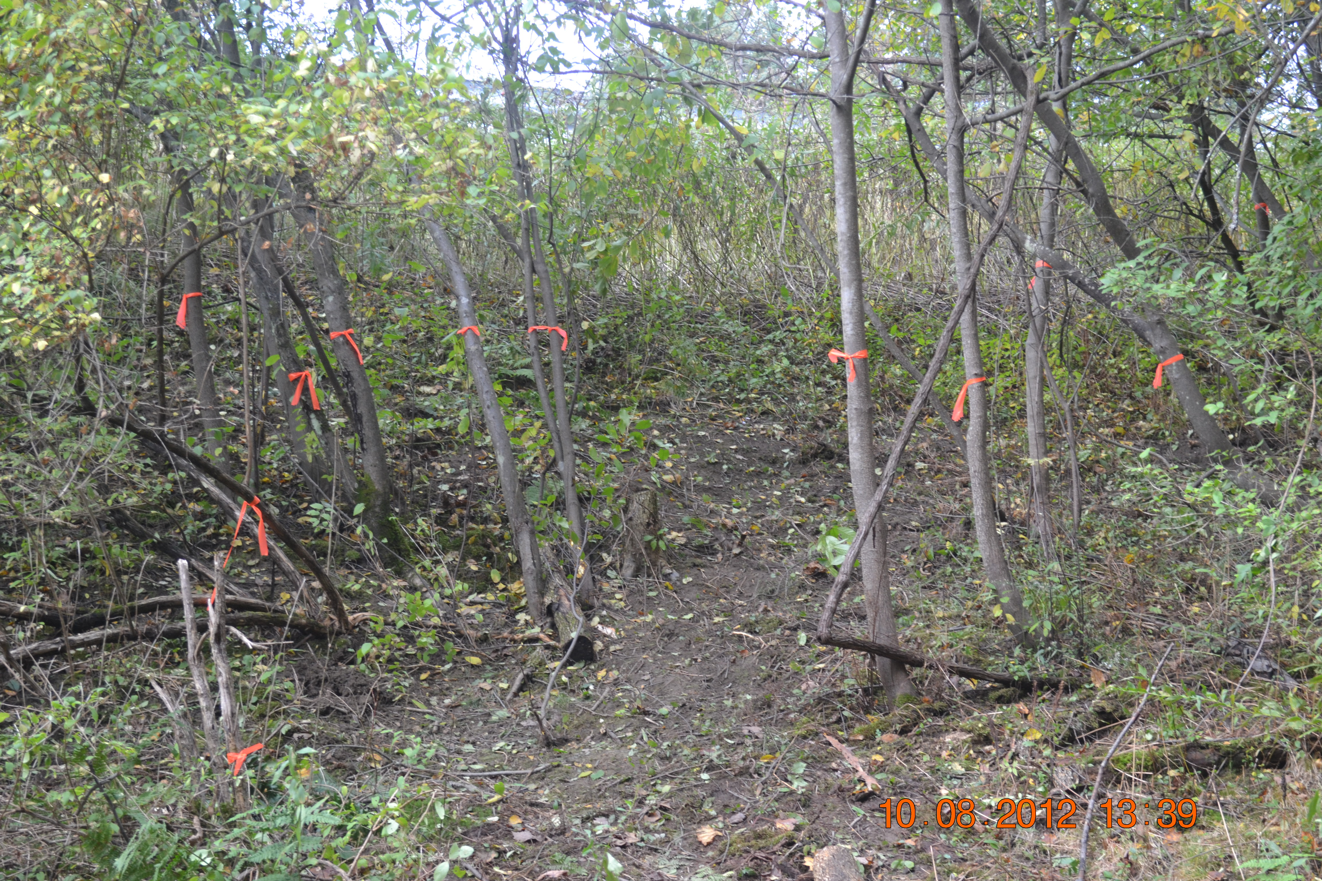 Picture of Removing the Invasives From the Property