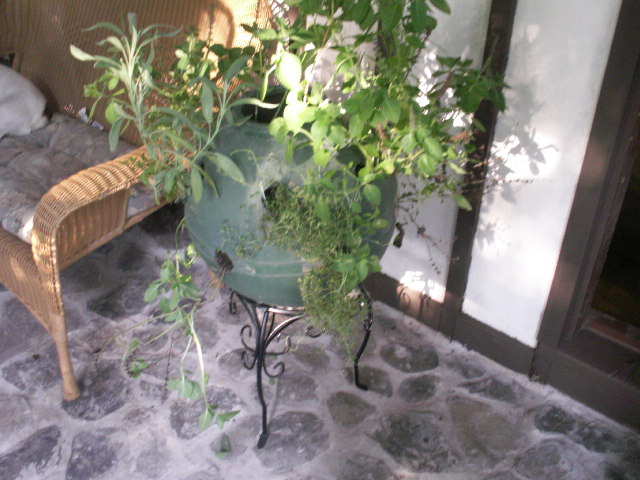 Picture of Spice Herb  Ball Planter