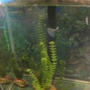 Aquarium plant number 2
