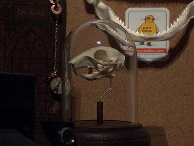 Simple Skull Display