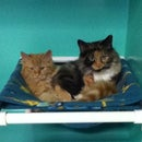 Large Cat Hammocks - Home or Shelter Use