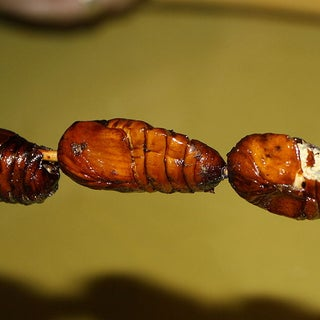 800px-Fried-silkworm-china_insects_worms.jpg