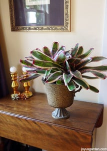 Bromeliads; There Are Many Genus & Species of These.