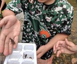 Ice Cube Tray Bug Holder