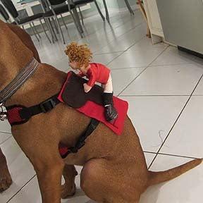 Halloween Puppy Costume - Horse & Jockey