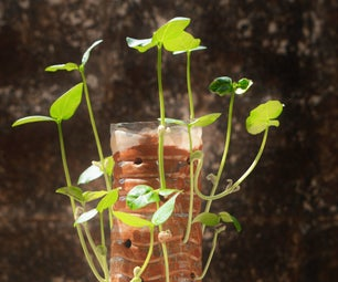 Vertical Gardening in a Bottle!