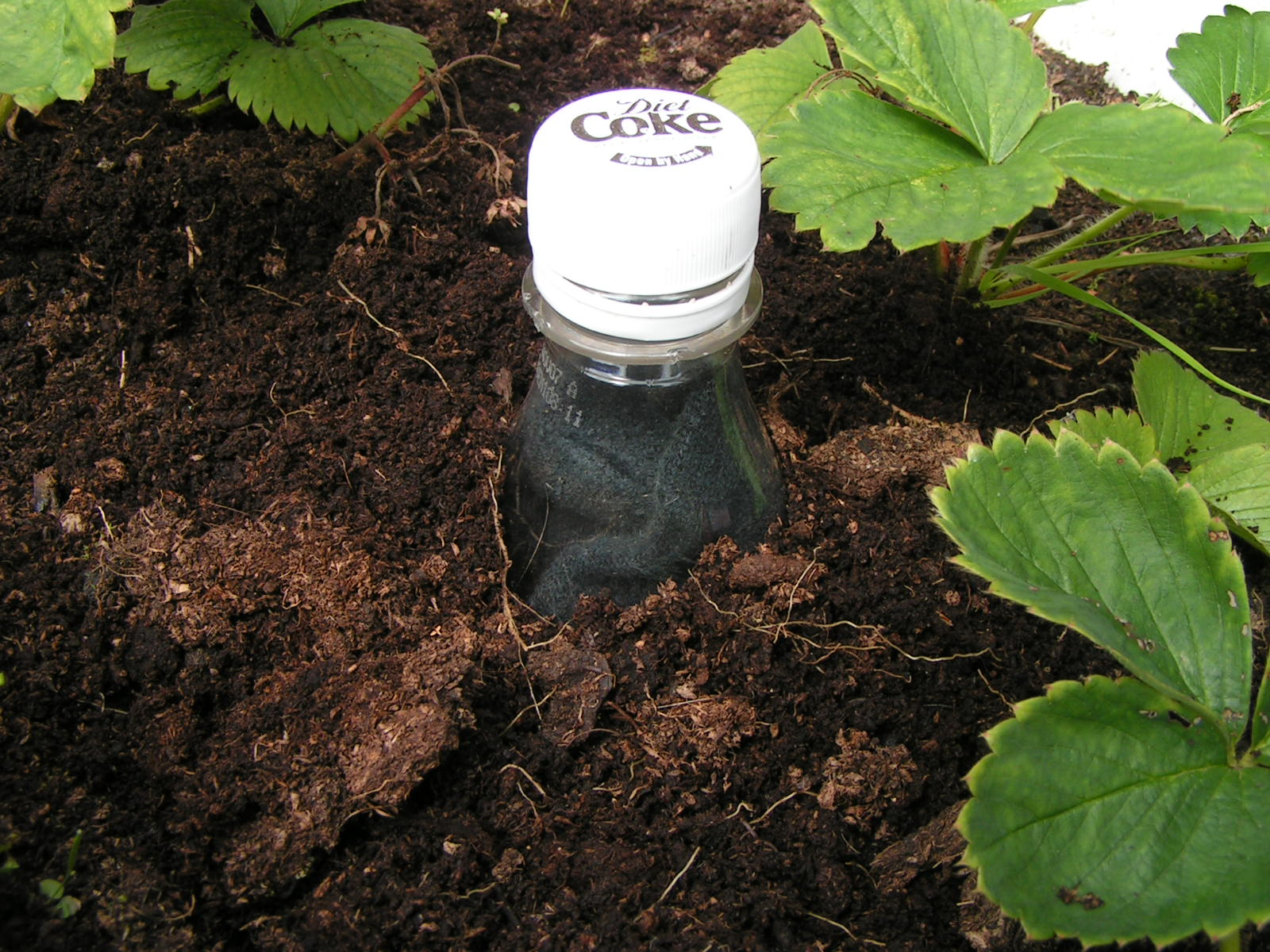 Picture of How to Save Water in Gardens and Small-holdings: the Scrooge Bottle.