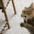 World's Best Cat Toy: Fishin' for Kitten