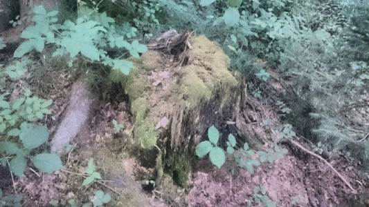 Finding the Moss