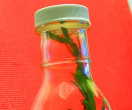 Slow Cooker Rosemary Garlic Infused Oil