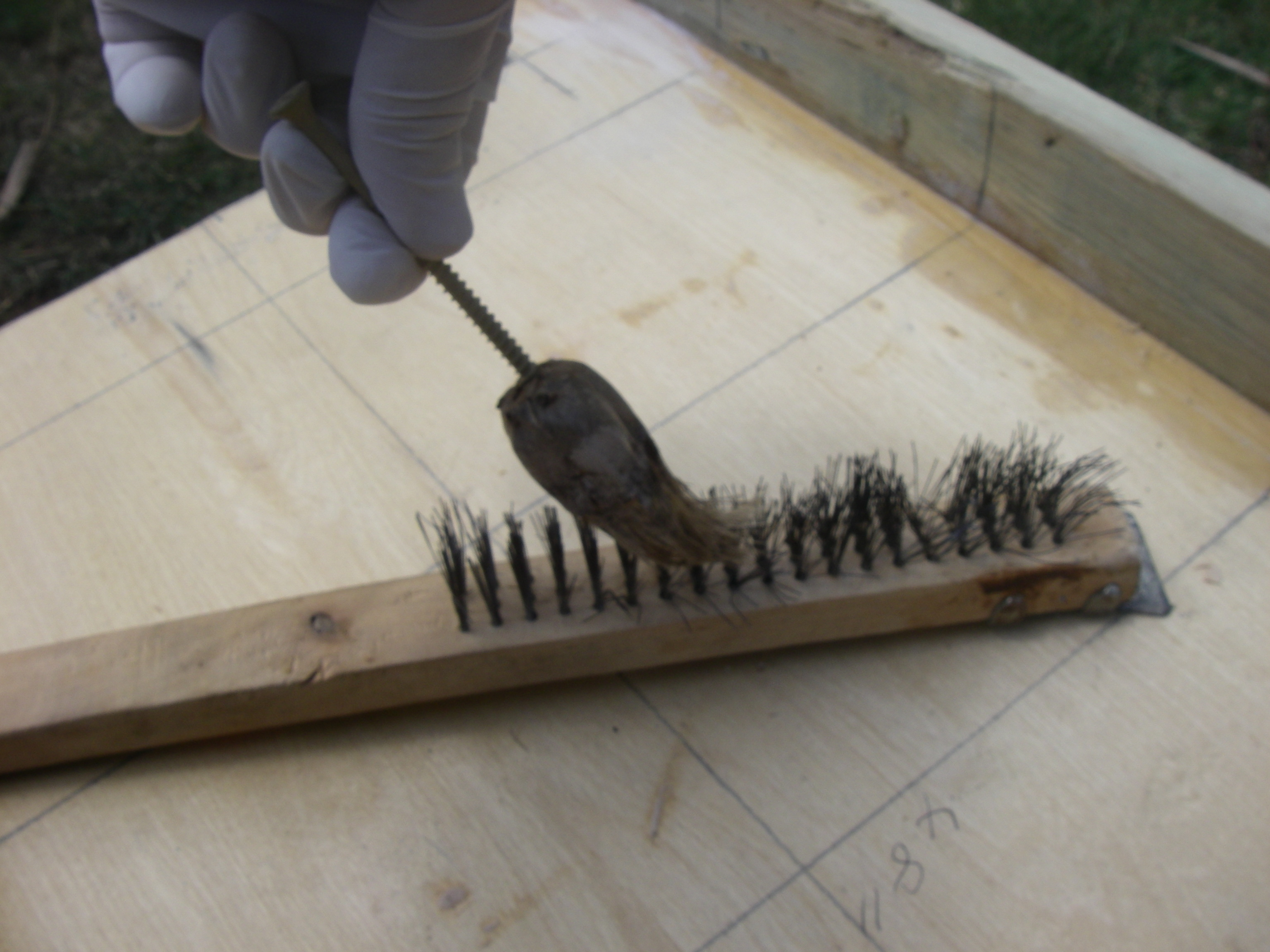 Picture of Make Paintbrushes From Pandanus Fruit