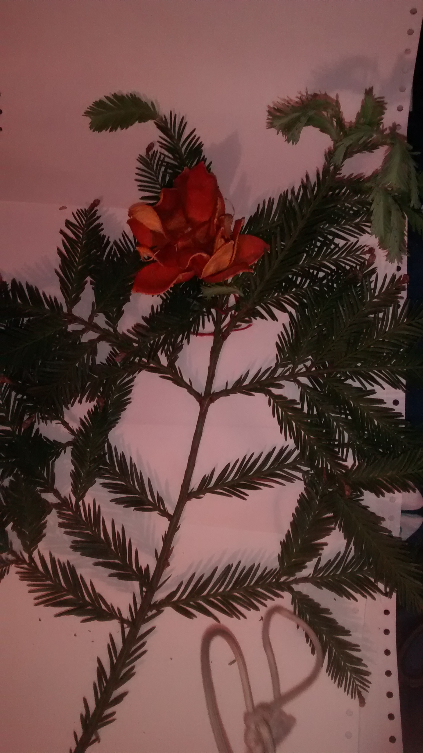 Picture of Tie Flower to Branch