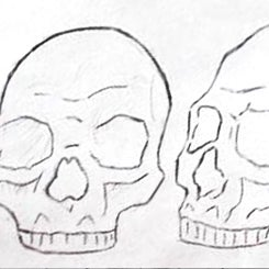 skull reference.jpg