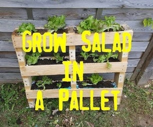 Grow Salad in a Pallet