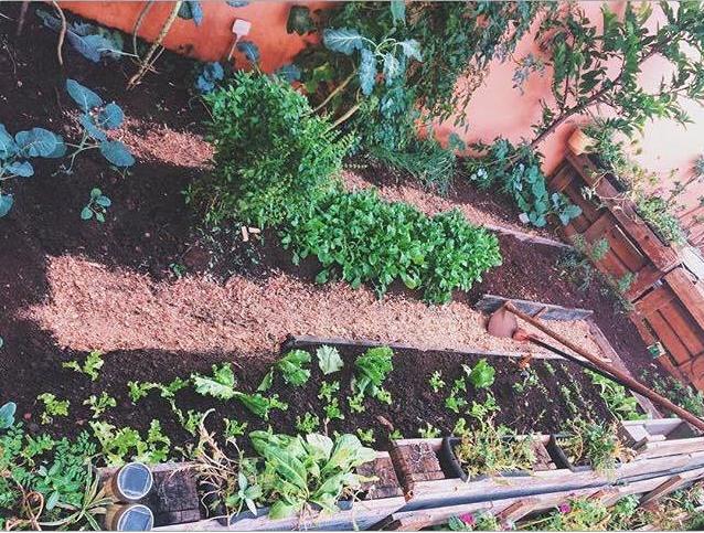 Picture of  How Organic Garden in Your Garden