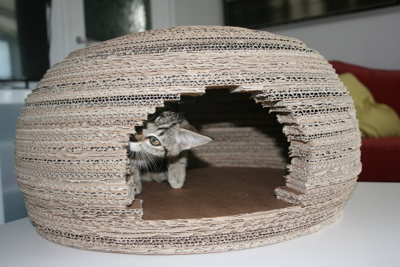 Picture of Cat Checking Your Work