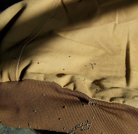 Picture of Remove Nettles and Stickers From Clothing