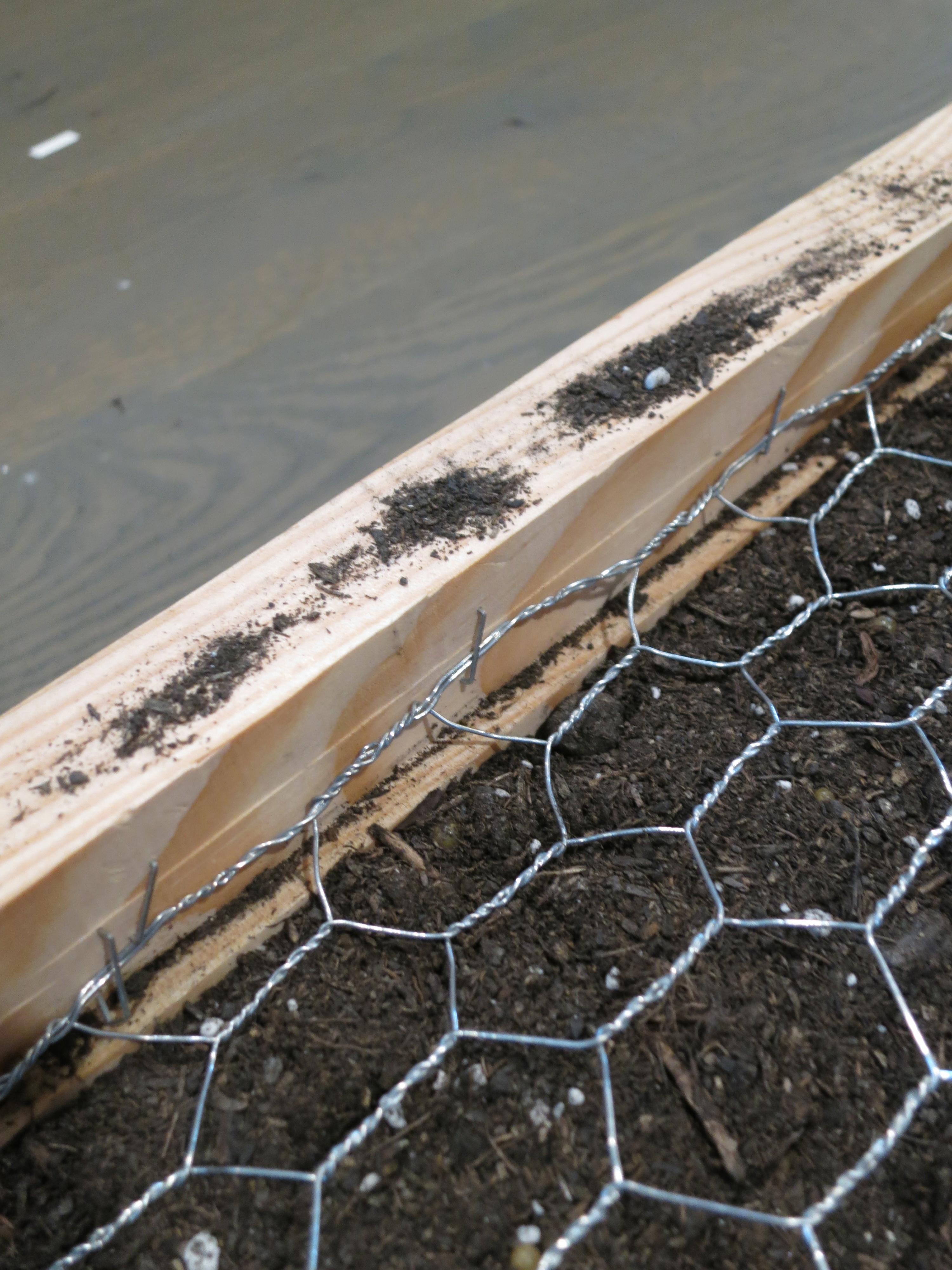 Picture of Attach Chicken Wire