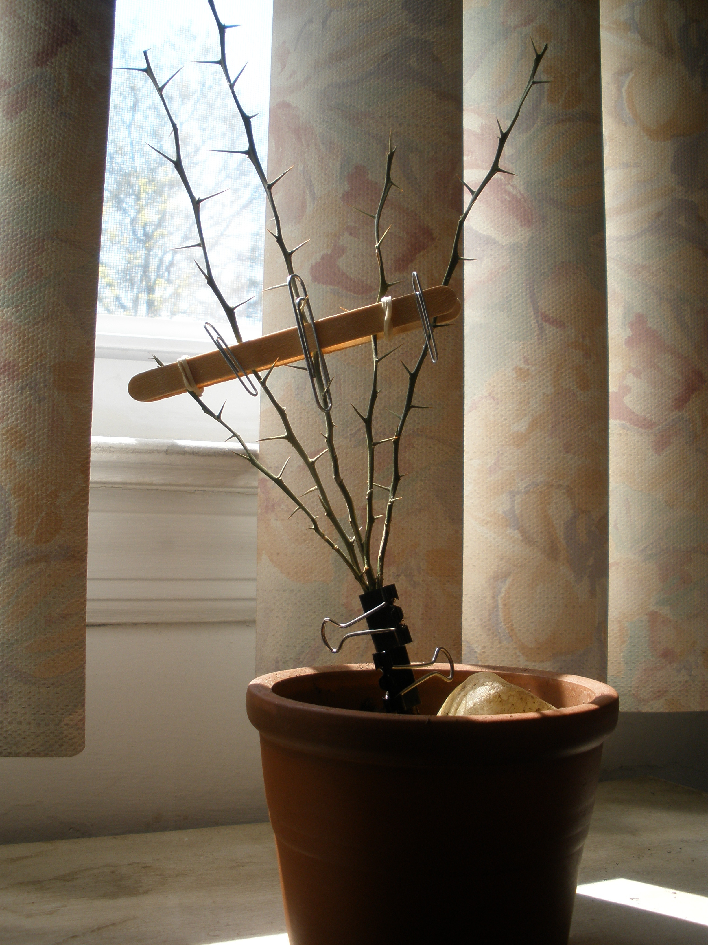 Picture of Grow Your Own Mini Tree Sculpture